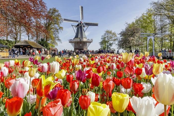 Amsterdam day trip to Keukenhof