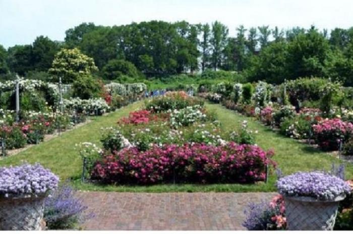 New-york day trip to Brookyln Botanic Garden