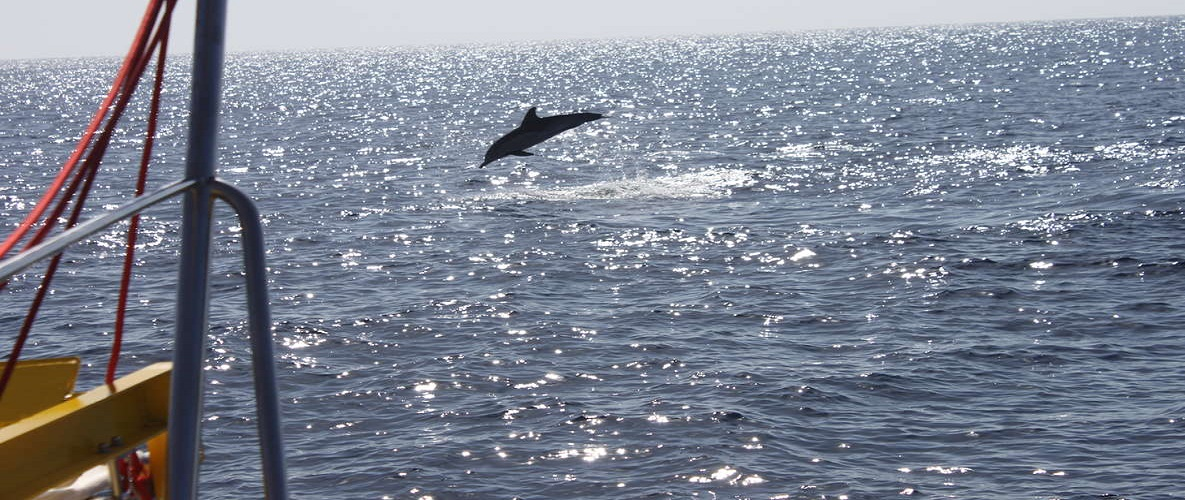 2.5-Hour Sunset and Dolphins Cruise Lanzarote