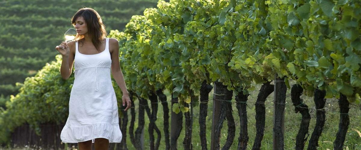 Vienna Woods Wine Tour - Wines, Vines & Good Times!