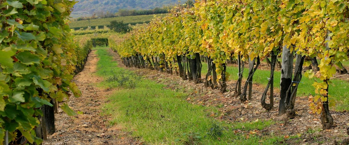 Budapest: Tokaj Wine Country Day-Trip