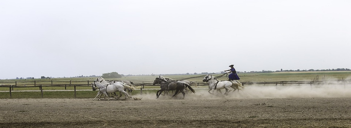 Day Trip from Budapest: Puszta Horse Show and Countryside