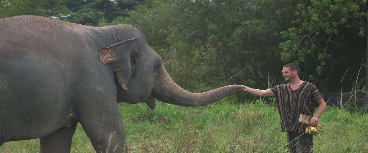 From Bangkok: Elephant Jungle Sanctuary Day Trip