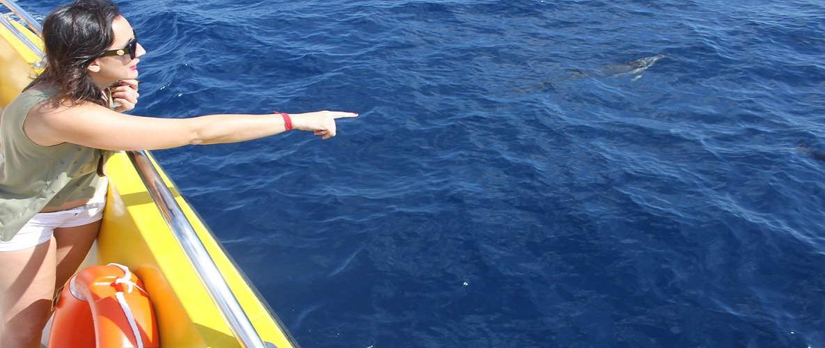 Lanzarote Sunset & Dolphin Tours