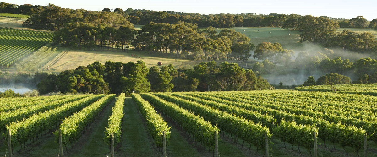 Mornington Peninsula Winery Tours with Cheese, Chocolate Tastings from Melbourn