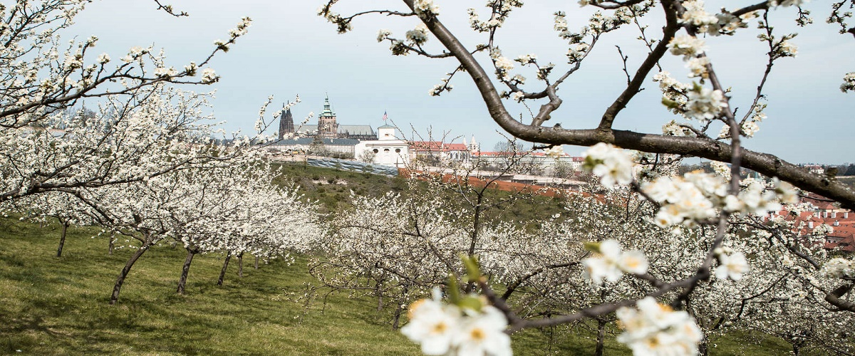 Prague Truffle Hunting Tour with Luxury Lunch