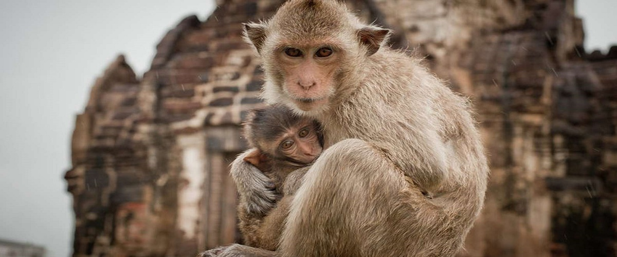 Private Excursion to Ayutthaya World Heritage and Lopburi Monkey Temple