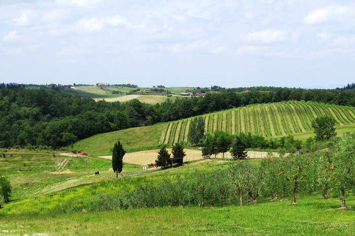 Chianti half-day tour from Florence
