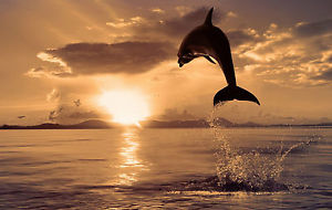 2.5-Hour Sunset and Dolphins Cruise