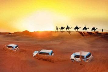 Go on a Night Safari at the Arabian Desert