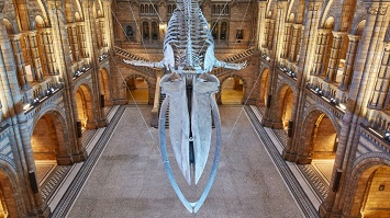 Hintze Hall, National History Museum