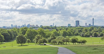 View the Sunrise from Primrose Hill