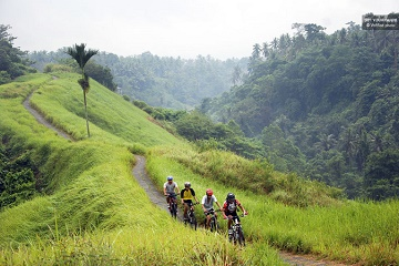 Half-Day Fat Tire Electric Bike Tour from Ubud Tickets