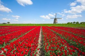 Holland in One Day Tour from Amsterdam Tickets