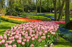 Keukenhof Gardens Day Trip from Amsterdam Tickets