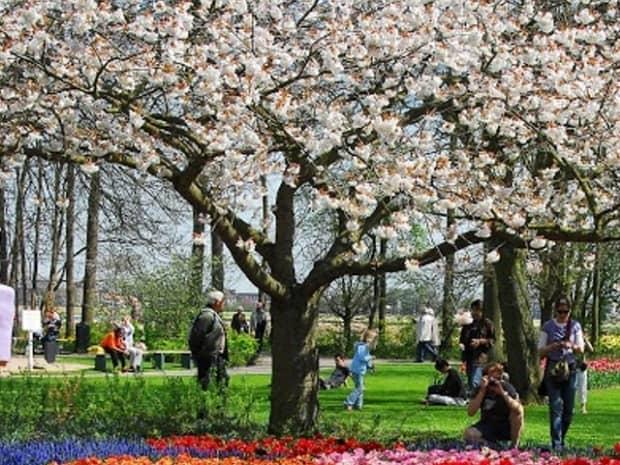 Keukenhof Gardens Day Trip from Amsterdam Tickets