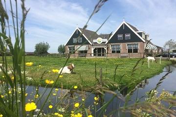 Amsterdam Hop-on-hop-off to Zaanse Schans, Edam & Volendam