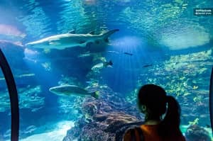 Barcelona Aquarium Skip the Line Ticket Tickets
