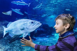 Fast track Madame Tussauds and AquaDom & SEA LIFE Tickets