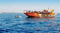 Dolphin Watching and Cave Tour Algarve Coast from Albufeira 2-Hour Tickets