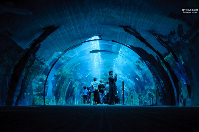 Dubai Aquarium and Burj Khalifa Combo Tickets Tickets