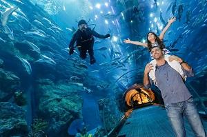 Dubai Aquarium & Underwater Zoo Skip the Line Ticket Tickets