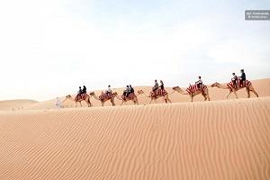 Dubai Desert Sunrise Camel Trek with Breakfast Tickets