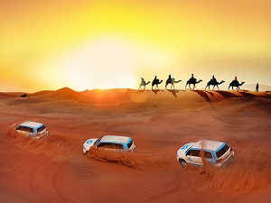 Red Dunes & Camel Safari with Sand boarding, Falconry, and BBQ Tickets