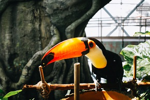 The Green Planet Dubai: Unique Indoor Rainforest Tickets