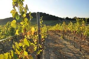 Small Group Tuscany Wine-Tasting Tour Tickets