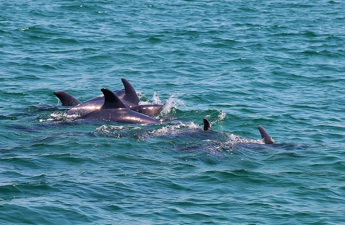 Dolphin Watching Lisbon Tickets