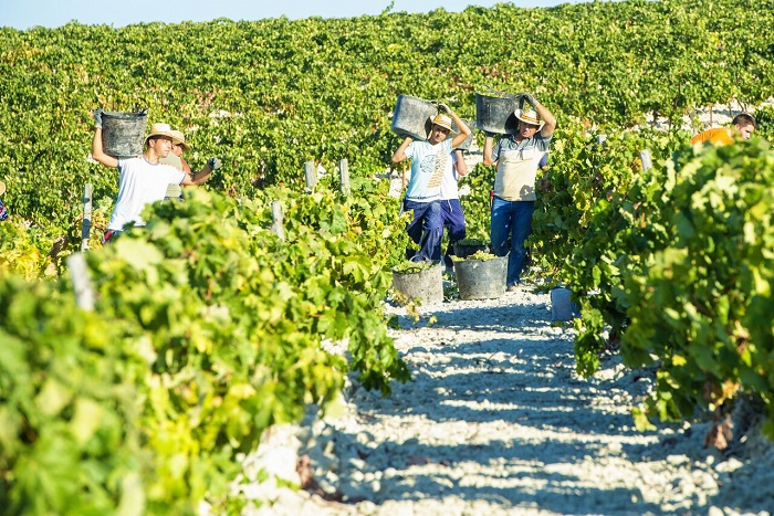 Jerez and Cadiz Day Trip from Costa del Sol with Winery Tour, Andalusian Horse Show and Sightseeing Cruise Tickets