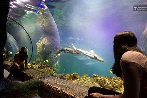 Munich Sea Life Day Skip the Line Ticket Tickets