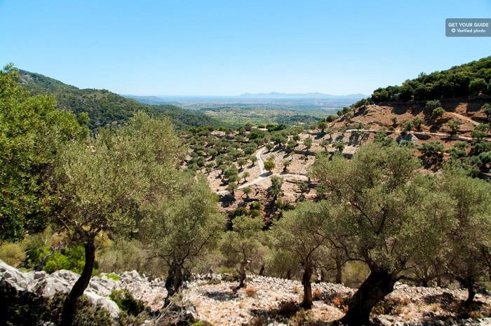 Jeep Safari Mountains of Mallorca Day Trip Tickets