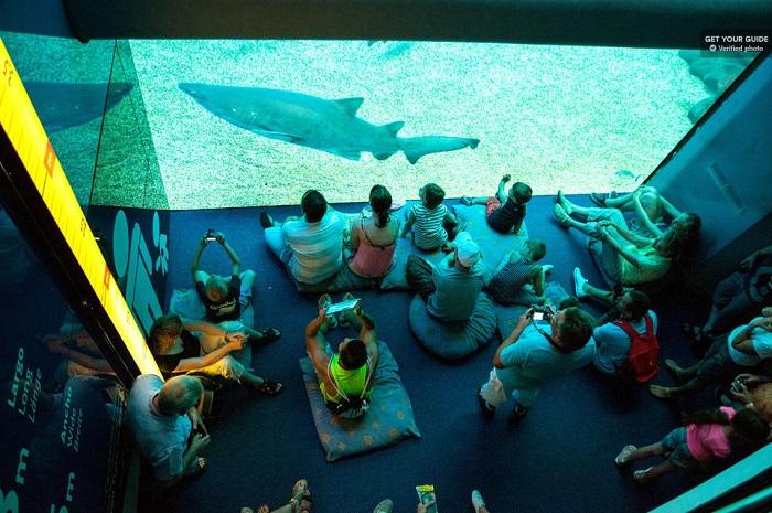 Palma Aquarium Entrance Ticket Tickets