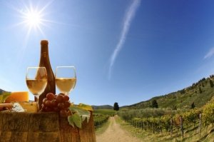 Tuscan Hills Wine Tasting Tour From Pisa or Lucca Tickets