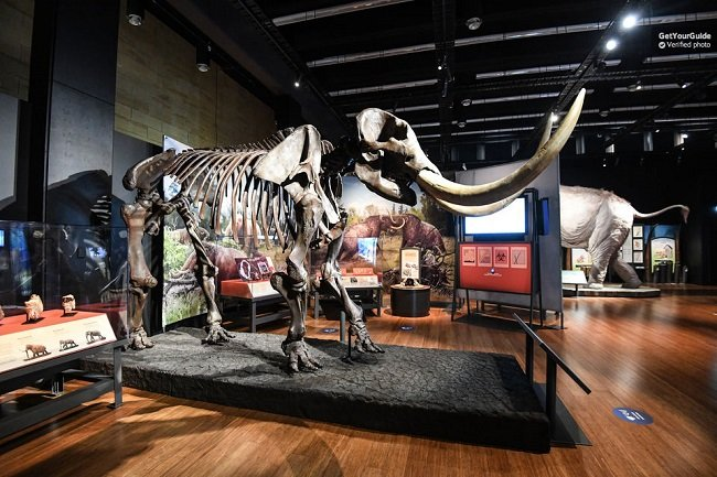 Australian Museum: Ice Age Mammoths Exhibition Sydney Entry Ticket Tickets