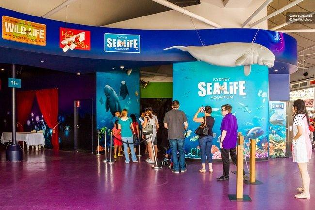Combo Ticket: Aquarium, Madame Tussauds, Wild Life Sydney Tickets