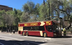 Sydney Hop-On-Hop-Off Bus Pass with Cruise & Sydney Tower Tickets