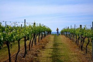 Hunter Valley Wineries with Lunch Tickets