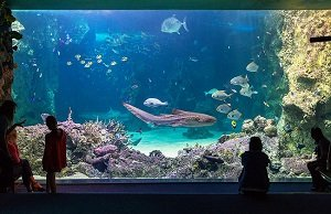 SEA LIFE Sydney Aquarium Tickets