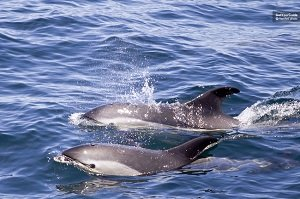 Luxury Yacht Cruise with Whale and Dolphin Watching Tickets