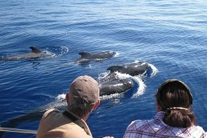 Tenerife Half-Day Whales and Dolphins Tour Tickets