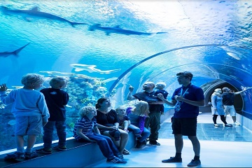 Tickets for Hop-on Hop-off Bus 72H & Blue Planet Aquarium